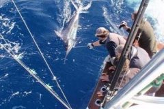 David Buys Striped Marlin