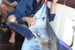 Ladies 8kg World Record Striped Marlin 125kg