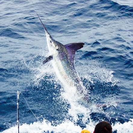 Marlin Master Class