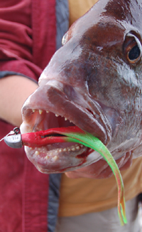 the fishing website TFW_Snapper