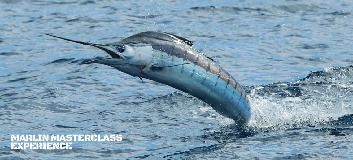 Marlin Masterclass Experience