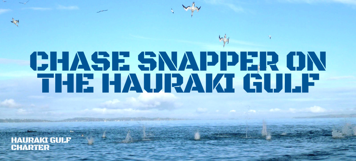 Chase Snapper on the Hauraki Gulf