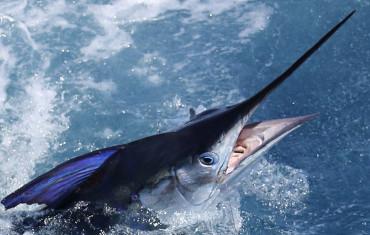 NZ Charter Fishing Experience